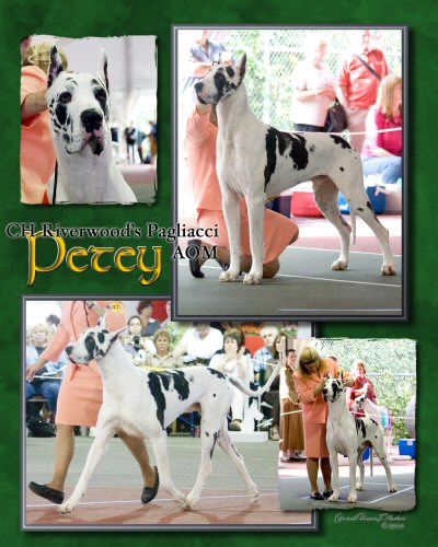 Petey Collage